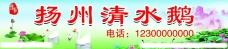 扬州清水鹅