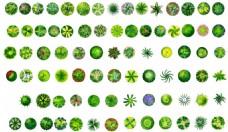 园林彩色树木平面效果图