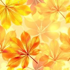 金色树叶背景