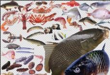 鱼  海鲜 蟹 虾  扇贝
