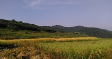 山川的田野