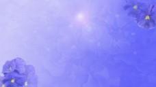 紫色背景图