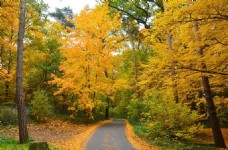 秋天森林里的小路