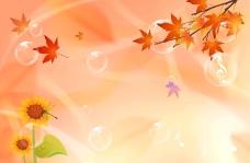 秋天背景 枫叶