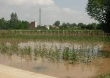 遭受水灾的农田