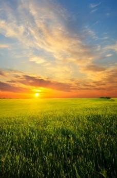 夕阳下的小麦田地