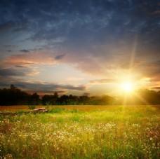 日落下的草地风景