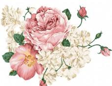 精美手绘花朵 卡通插画鲜花素材