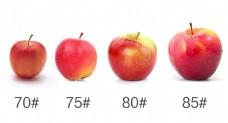 红富士苹果型号对比