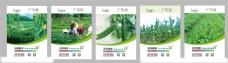 农业生鲜海报