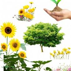 向日葵 花朵 手捧树苗