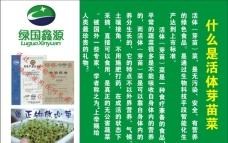 芽苗菜海報