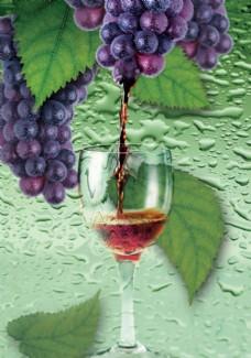 PSD分层素材  美味葡萄酒