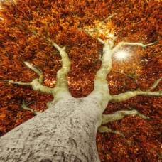 秋天大树背影图片