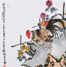 菊花 公鸡