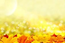 梦幻光斑与秋天树叶图片
