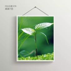 绿叶摄影无框装饰画