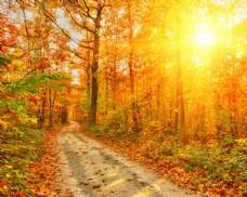 秋日树林里的小路图片