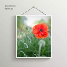 红花花卉无框装饰画