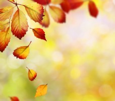 梦幻光斑与飘落的树叶图片