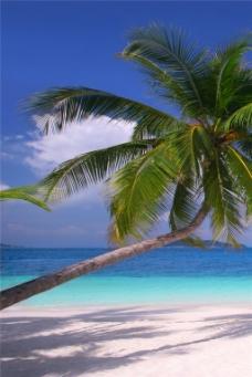 椰树海滩装饰画