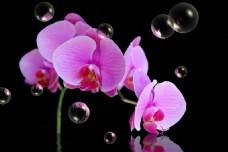 花朵泡沫装饰画