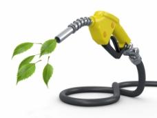 绿色树叶和加油器图片