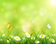 草丛中的蝴蝶