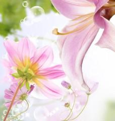 汽泡与粉色花朵图片
