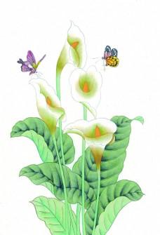 水仙花卉与蝴蝶图片