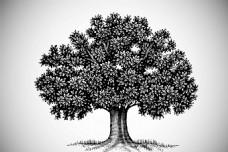 植物 树木