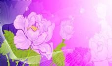 紫色花卉图片素材