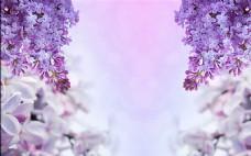 紫色背景装饰墙