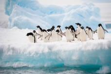 冰面上的一群企鹅图片