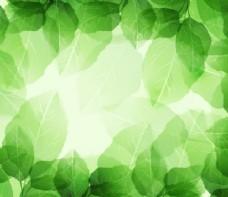 鲜绿色边框背景