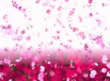 粉色花瓣装饰画