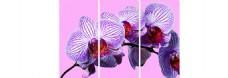 紫色花朵装饰画