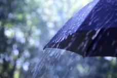 雨中的黑色伞图片