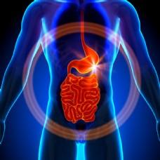 男性肠胃器官图片