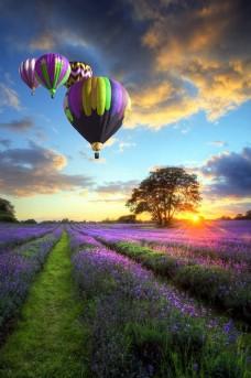 热气球与薰衣草图片