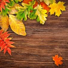 树叶与木板背景图片