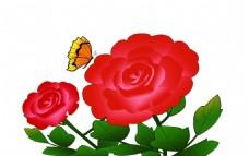 玫瑰 花朵