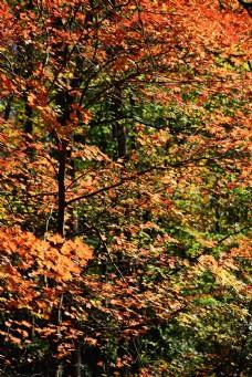 秋天背景图片图片