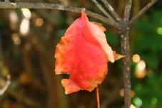 树枝上的叶子图片