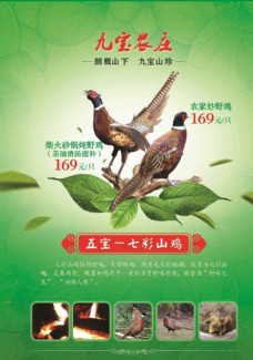 九宝农庄七彩山鸡