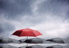 雨中的伞图片