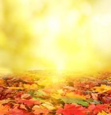 梦幻光斑梧桐树叶背景图片