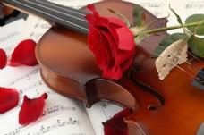 小提琴与红色玫瑰图片
