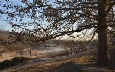 冬日植物园