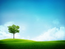 绿色原野上的绿色的树高清风景图片图片